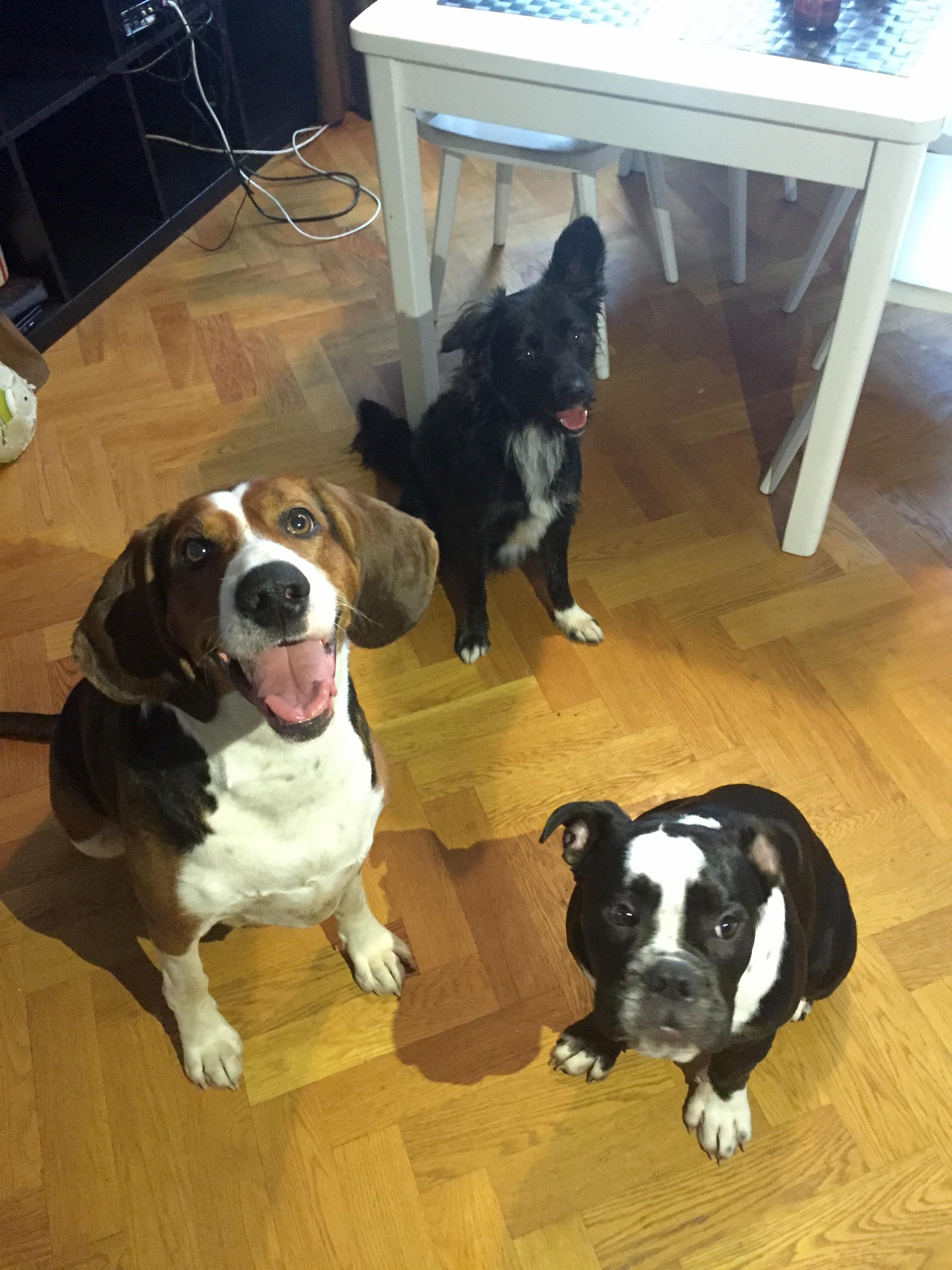 gratis hundar bortskänkes